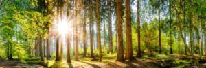 Wald im Frühling, Panorama einer idyllischen Landschaft mit Bäumen und Sonne